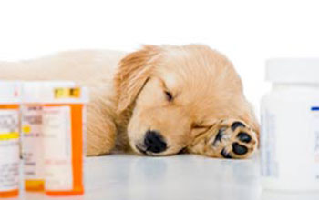 Xanax for dogs to treat sleeping problems